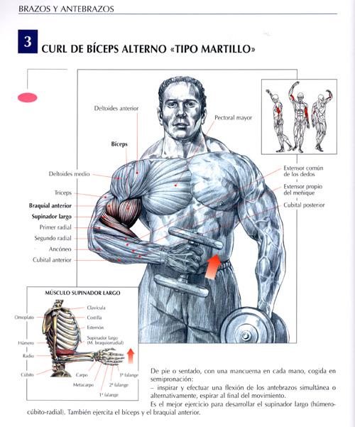 rutina pregnancy pecho y biceps linear unit el gym